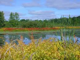 Wisconsin scenery images Vilas county wisconsin scenery showing some water willow aka jpg