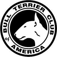 america pit bull terrier club bull terrier club of america