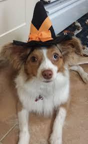 17 best halloween images on pinterest humane society pet