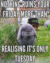 Funny Rabbit Memes - pictures and memes from the small furry hotel cute pictures of