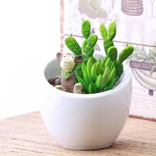 flower blazer picture more detailed picture about succulents