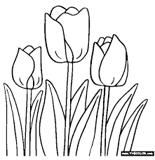 tulip flower picture flowers pictures tulip coloring