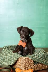 puppy thanksgiving 101 dog names for southern pups southern living