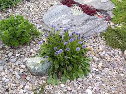 what are good plants for rock gardens video and photos