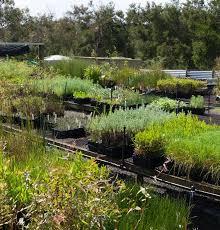 native plant nurseries melbourne barb martin bush bank nursery phillip island indigenous plants