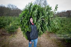 How To Trim A Real Christmas Tree - christmas in west sussex the horsham real christmas tree