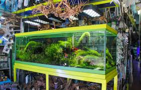 Pacific Aquascape A Chinatown Aquarium Store Stays Afloat