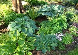 shade loving perennials australia plants for your garden u2013 home design