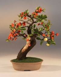 41 best bonsai images on wire trees bonsai and bonsai