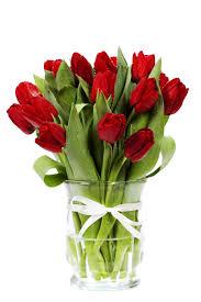 tulip 4914 tulip flowers