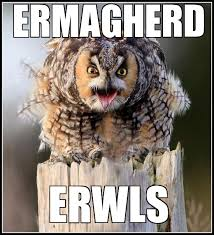 Ermahgerd Meme Generator - ermahgerd owl weknowmemes generator