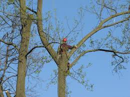 eastwood rd york pa 17402 we removed their trees with crane service
