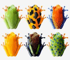 smart frog igor mitin design