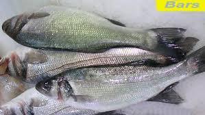 cuisine bar poisson dictionnaire de cuisine et gastronomie bar