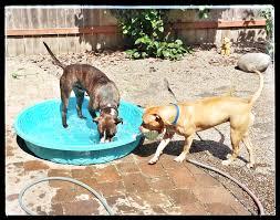 dz u0027s adventures giardia in dogs