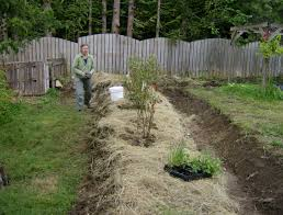 garden design garden design with patriot blueberry plant small