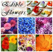 organic edible flowers edible flowers seed gift in a box