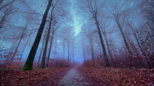 wallpaper tumblr forest autumn forest wallpaper wallpapers and backgrounds pinterest