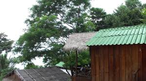 the cove beach bungalows sihanoukville info youtube