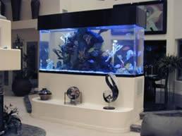 designer aquarium phuket aquariums designer water scapes