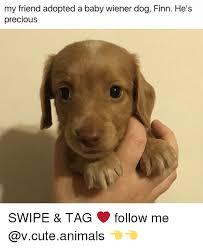 Wiener Dog Meme - 25 best memes about wiener dog wiener dog memes