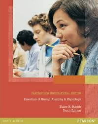 Human Anatomy And Physiology Marieb Hoehn Anatomy Coloring Book Marieb Marieb U0026 Hoehn Human Anatomy