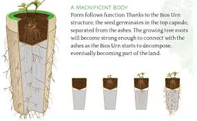 cremation tree tree urns review top 4 biodegradable urns on the market today