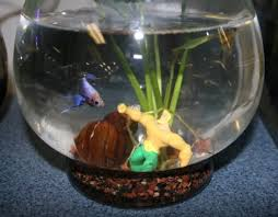 adding a personal touch to your aquarium décor that fish