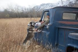 dog hunting truck how a 1964 chevy pickup became part of the family wsj