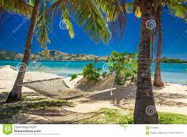 hammock in the shade of palm trees on a beach stock photo image