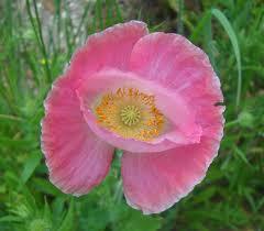 plants native to ontario common texas wildflowers common ontario wildflowers intended