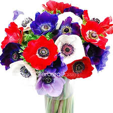 anemones flowers bulk flowers mixed colors anemones