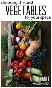 Patio Vegetables by 6153 Best Gardening For Food Images On Pinterest Gardening