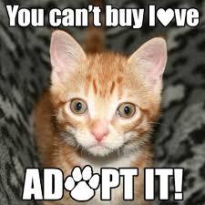 Mere Cat Meme - mere gillingham dorset cat s protection branch photos facebook