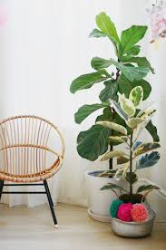 tips for keeping indoor plants alive u2013 a beautiful mess