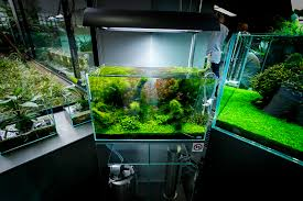 ada nature aquarium gallery aquariums galleries and planted