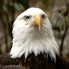 bird vision wikipedia