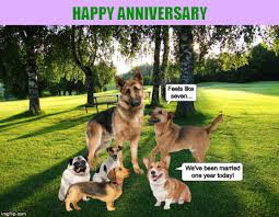 Dog Lover Meme - a wedding anniversary card for dog lovers imgflip