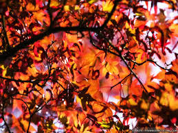 fall leaves best quality wallpapers 3956 amazing wallpaperz
