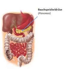 bauchspeicheldrüsenschwäche symptome bauchspeicheldrüse anatomie und erkrankungen