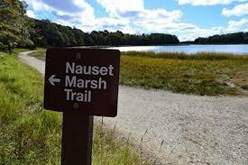 Nauset Marsh Cape Cod - biking cape cod on the trail of henry david thoreau gonomad travel