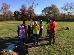 let s plant some trees richmond tree stewards