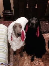 Halloween Sheep Costume 26 Coolest Dog Costume Ideas Halloween Funny Ideas