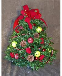 boxwood tree red u0026 green apples