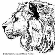 lion drawing draw lion step step