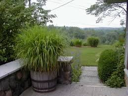 grasses in containers exles