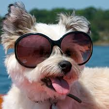 Dog With Glasses Meme - pictures of dogs wearing sunglasses popsugar pets