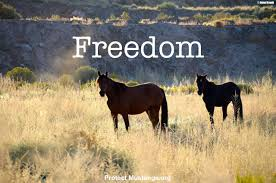 mustang org petitions protect mustangs