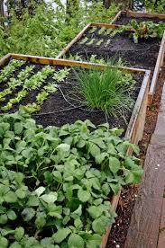 terraced bellevue vegetable garden u2014 seattle urban farm company