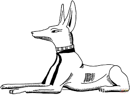 black backed jackal coloring page free printable coloring pages